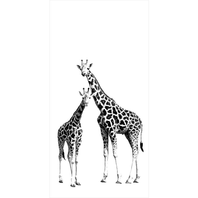 Fototapete 'Giraffen' 139,5x279cm