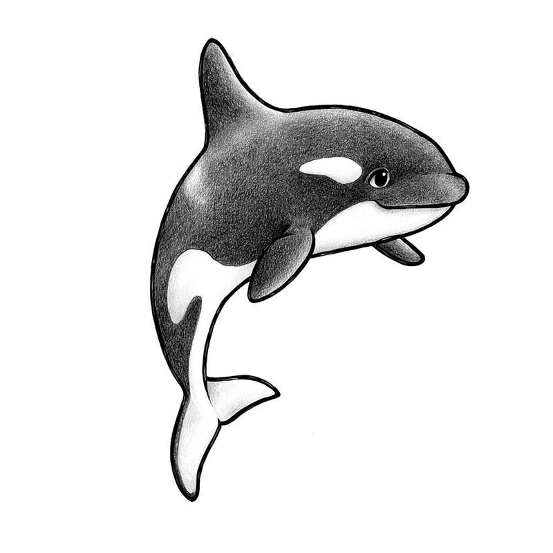Wandsticker 'Orca' handgezeichnet