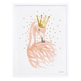 Flamingo/Federn